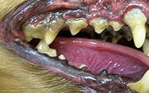 歯石_211x132